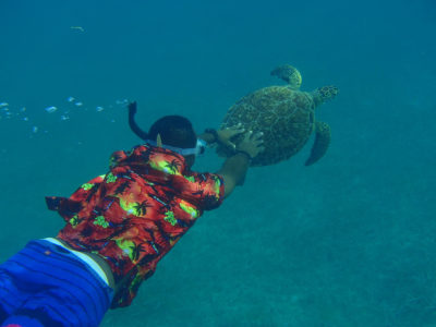 Swimming with a Turtle on Sint Maarten-Saint Martin
