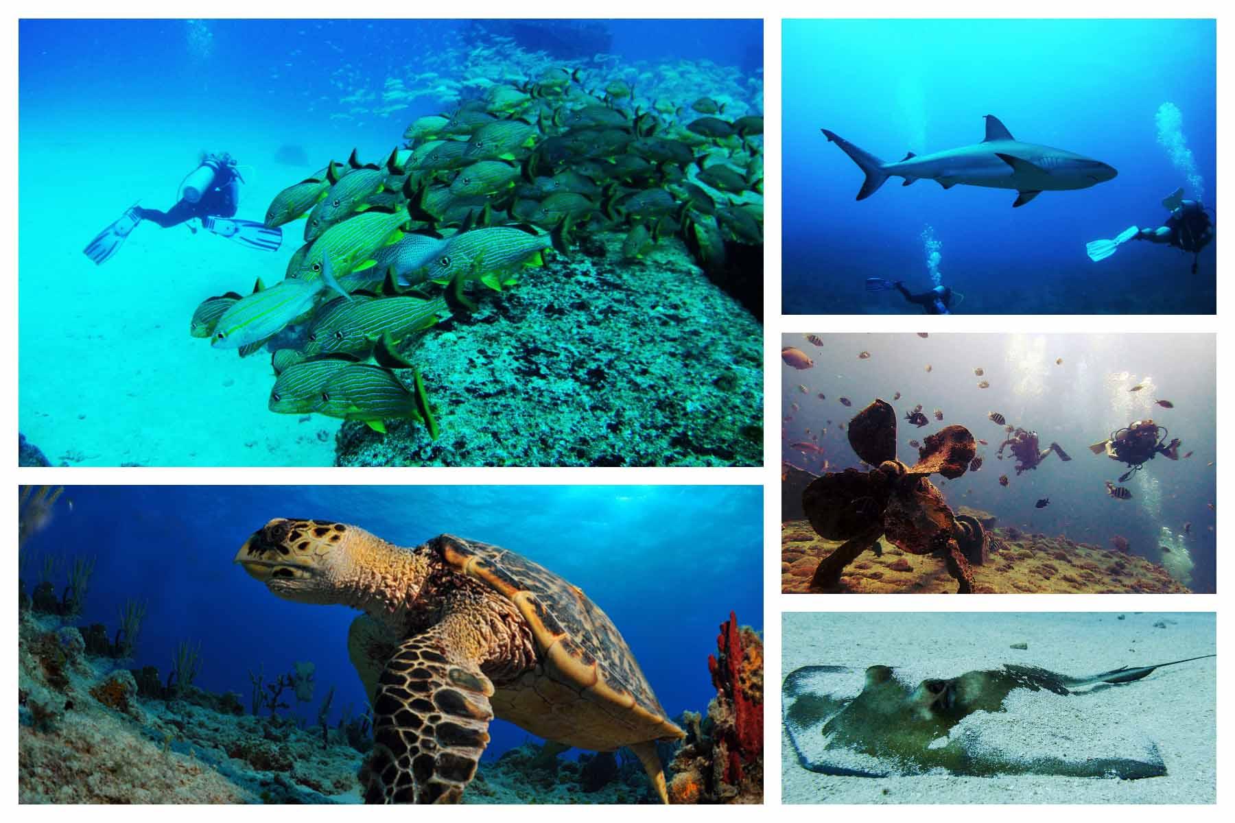 Dive Sint Maarten - WORLD CLASS DIVING SXM - Scuba diving on St. Martin / St. Maarten. Friendly, professional and certified instruction.